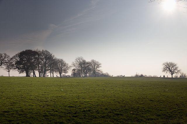 mounts field park